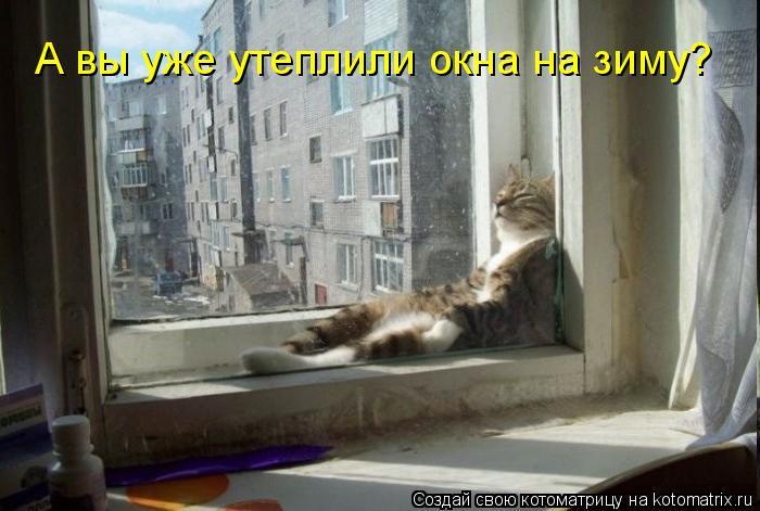 Котоматрица: А вы уже утеплили окна на зиму?