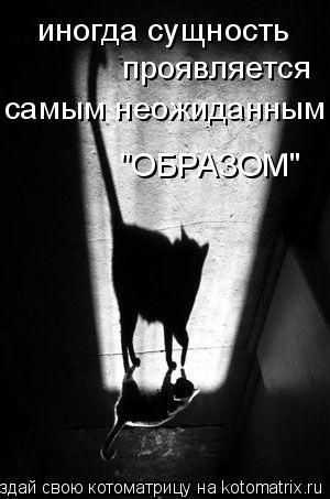 """Котоматрица: иногда сущность  проявляется самым неожиданным """"ОБРАЗОМ"""""""