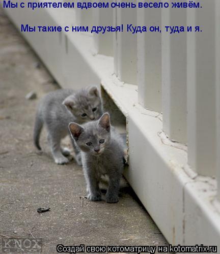 Котоматрица: Мы с приятелем вдвоем  очень весело живём. Мы такие с ним друзья! Куда он, туда и я. Мы такие с ним друзья! Куда он, туда и я.