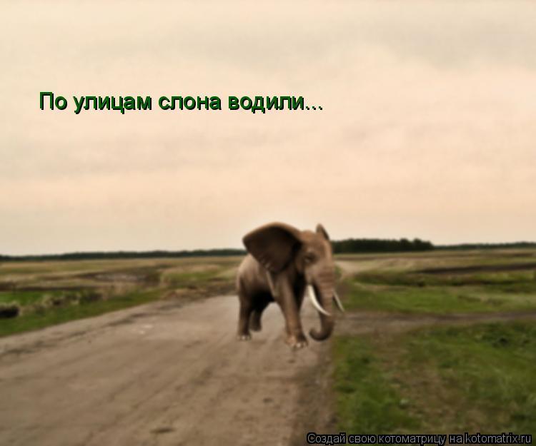 Котоматрица: По улицам слона водили...
