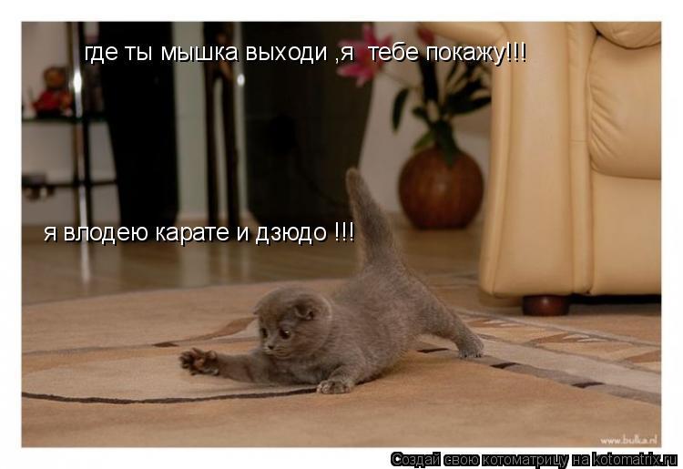 Котоматрица: где ты мышка выходи ,я  тебе покажу!!! я влодею карате и дзюдо !!!