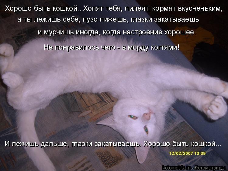 Котоматрица: Хорошо быть кошкой...Холят тебя, лилеят, кормят вкусненьким, а ты лежишь себе, пузо лижешь, глазки закатываешь и мурчишь иногда, когда настро