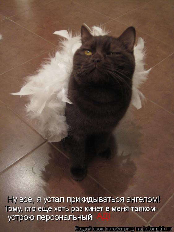 Котоматрица: Ну все, я устал прикидываться ангелом! Тому, кто еще хоть раз кинет в меня тапком- устрою персональный АД!