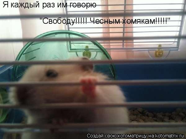 """Котоматрица: Я каждый раз им говорю """"Свободу!!!!! Чесным хомякам!!!!!"""""""