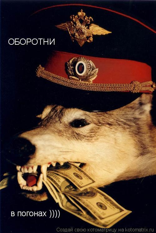 Котоматрица: ОБОРОТНИ в погонах ))))