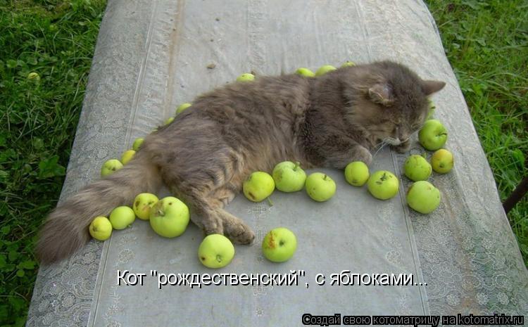 """Котоматрица: Кот """"рождественский"""", с яблоками..."""