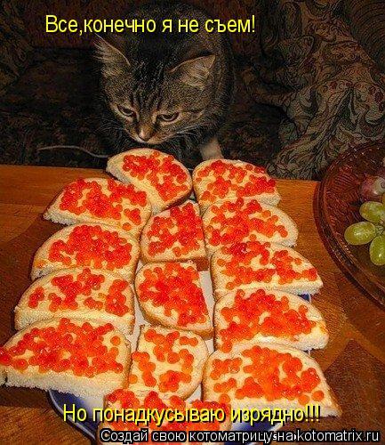 Котоматрица: Все,конечно я не съем!                                                                                                    Но понадкусываю изрядно!!!