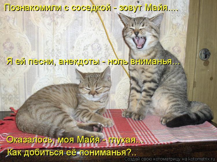 Котоматрица: Познакомили с соседкой - зовут Майя.... Я ей песни, анекдоты - ноль вниманья... Оказалось, моя Майя - глухая... Как добиться её пониманья?..