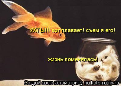 Котоматрица: жизнь поменялась! УХТЫ!!! кот плавает! съем я его!