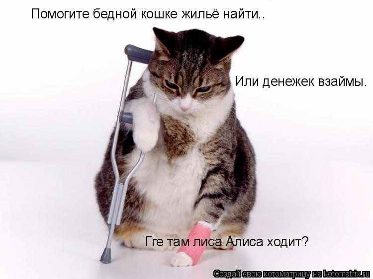 Котоматрица: Помогите бедной кошке жильё найти.. Или денежек взаймы. Гге там лиса Алиса ходит?