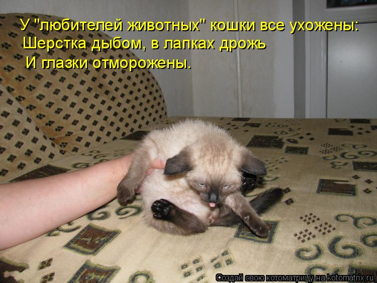 """Котоматрица: У """"любителей животных"""" кошки все ухожены: Шерстка дыбом, в лапках дрожь И глазки отморожены."""