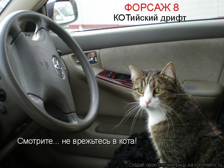 Котоматрица: ФОРСАЖ 8 КОТийский дрифт Смотрите... не врежьтесь в кота!