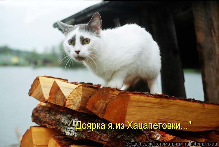 "Котоматрица: ""Доярка я,из Хацапетовки..."""