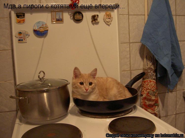 Котоматрица: Мда,а пироги с котятами ещё впереди...