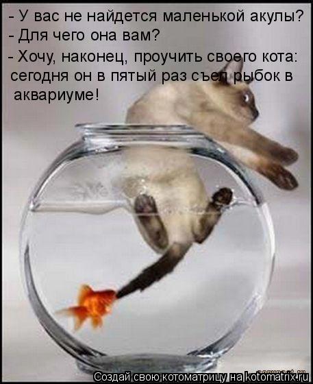 Котоматрица: - У вас не найдется маленькой акулы?  - Для чего она вам? - Хочу, наконец, проучить своего кота: сегодня он в пятый раз съел рыбок в  аквариуме!