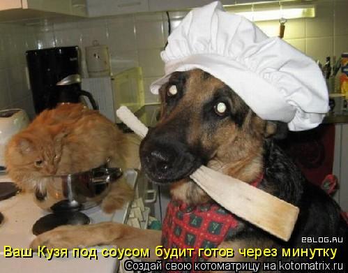 Котоматрица: Ваш Кузя под соусом будит готов через минутку