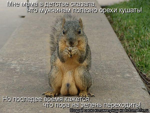 Котоматрица: Мне мама в детстве сказала,  что мужчинам полезно орехи кушать! Но последее время кажется,  что пора на зелень переходить!