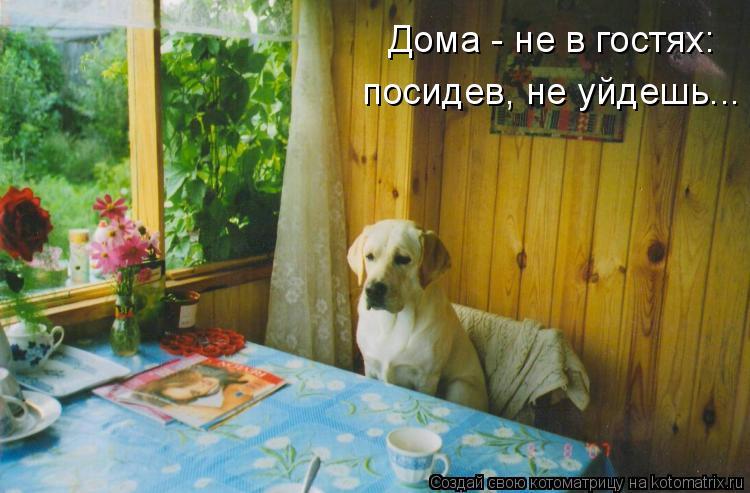 Котоматрица: Дома - не в гостях:  посидев, не уйдешь...