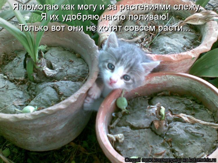 Котоматрица: Я помогаю как могу и за растениями слежу. Я их удобряю,часто поливаю! Только вот они не хотят совсем расти...
