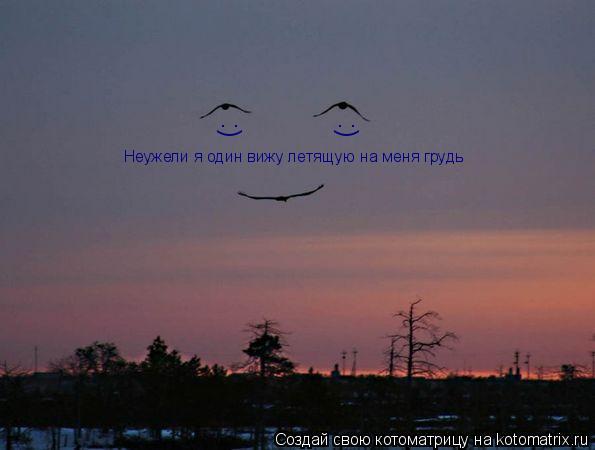Котоматрица: Неужели я один вижу летящую на меня грудь :) :)