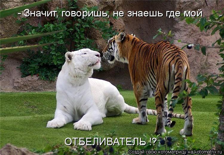 Котоматрица: - Значит, говоришь, не знаешь где мой ОТБЕЛИВАТЕЛЬ !?