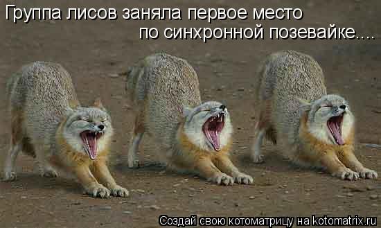 Котоматрица: Группа лисов заняла первое место по синхронной позевайке....