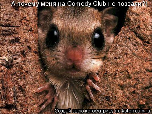 Котоматрица: А почему меня на Comedy Club не позвали?!