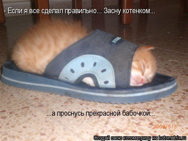 Котоматрица: - Если я все сделал правильно... Засну котенком... ...а проснусь прекрасной бабочкой...