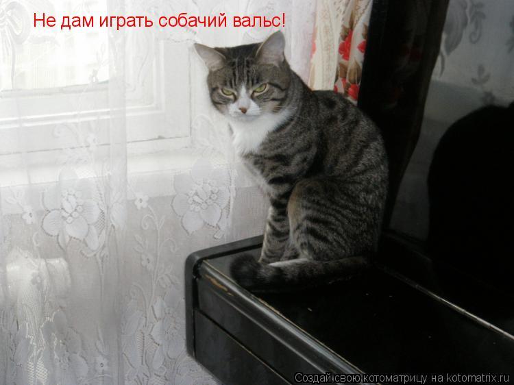 Котоматрица: Не дам играть собачий вальс!