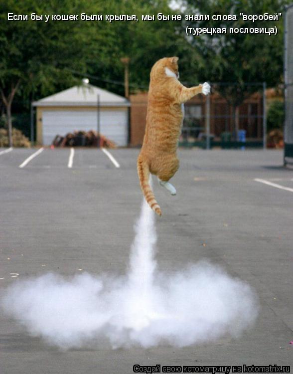 """Котоматрица: Если бы у кошек были крылья, мы бы не знали слова """"воробей""""  (турецкая пословица)"""