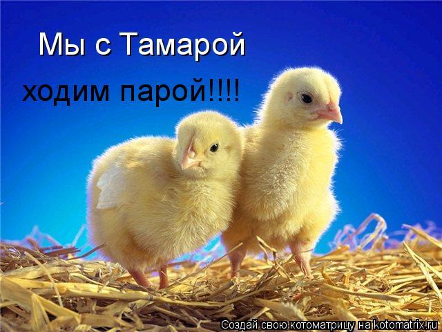 Котоматрица: Мы с Тамарой ходим парой!!!!