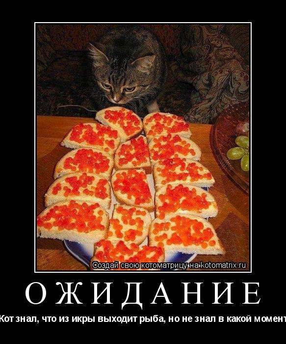 Котоматрица: ОЖИДАНИЕ Кот знал, что из икры выходит рыба, но не знал в какой момент