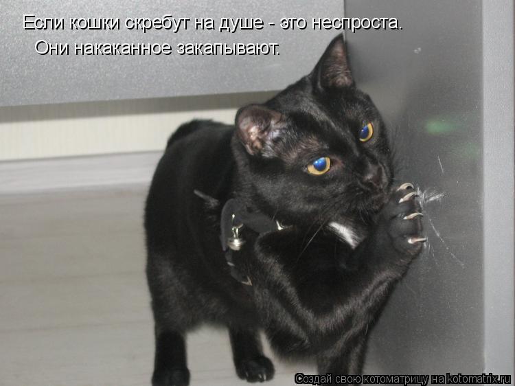 Котоматрица: Если кошки скребут на душе - это неспроста. Они накаканное закапывают.