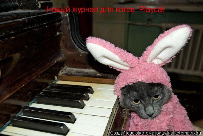 Котоматрица: Новый журнал для котов  Plаycat