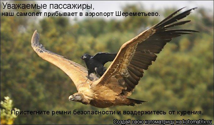 Котоматрица: Уважаемые пассажиры, наш самолет прибывает в аэропорт Шереметьево. Пристегните ремни безопасности и воздержитесь от курения.