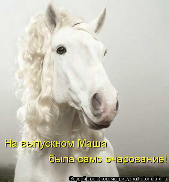 Котоматрица: На выпускном Маша  была само очарование!