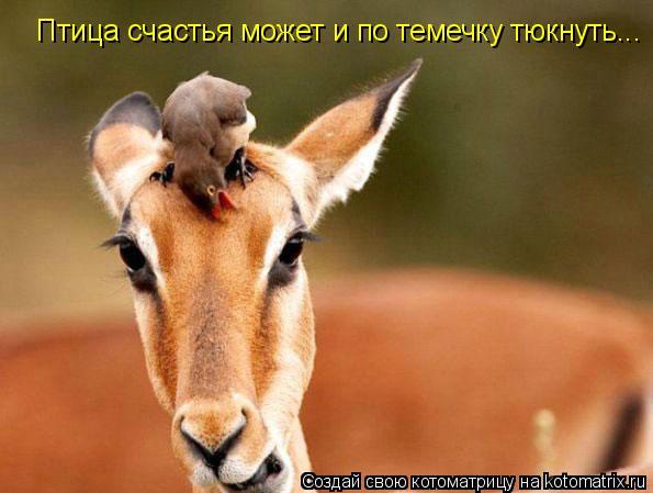 Котоматрица: Птица счастья может и по темечку тюкнуть...