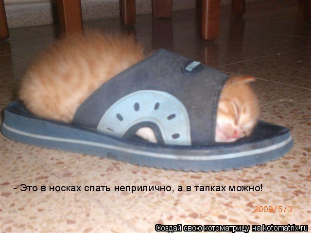 Котоматрица: - Это в носках спать неприлично, а в тапках можно!