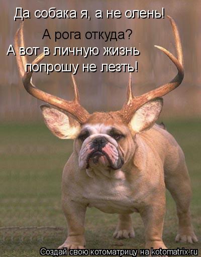 Котоматрица: Да собака я, а не олень! А рога откуда? А вот в личную жизнь  попрошу не лезть!