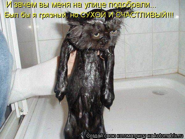 Котоматрица: И зачем вы меня на улице подобрали... Был бы я грязный, но СУХОЙ И СЧАСТЛИВЫЙ!!!