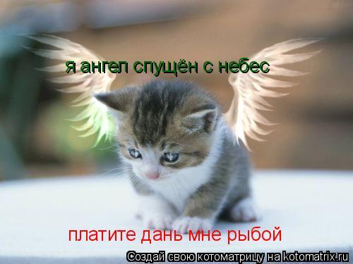 Котоматрица: я ангел спущён с небес  платите дань мне рыбой