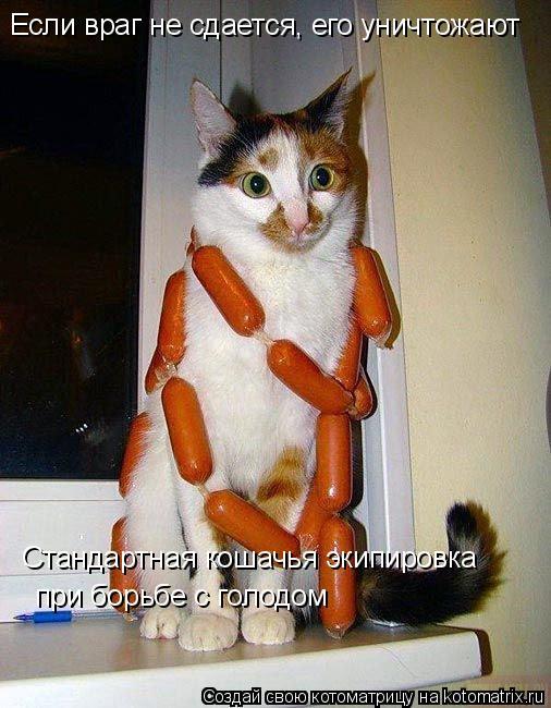 Котоматрица: Если враг не сдается, его уничтожают Стандартная кошачья экипировка при борьбе с голодом