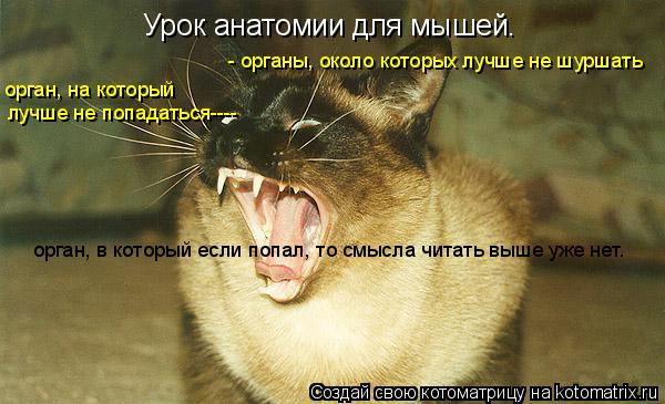 Котоматрица: Урок анатомии для мышей. лучше не попадаться---- орган, на который - органы, около которых лучше не шуршать орган, в который если попал, то смыс