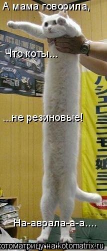 Котоматрица: А мама говорила, Что коты... ...не резиновые! На-аврала-а-а....