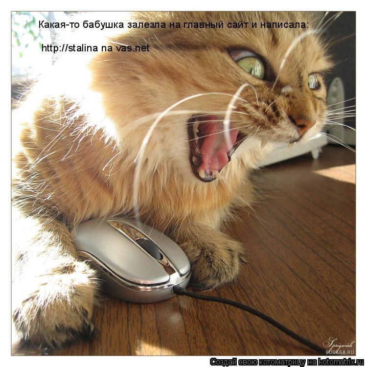 Котоматрица: Какая-то бабушка залезла на главный сайт и написала: http://stalina na vas.net