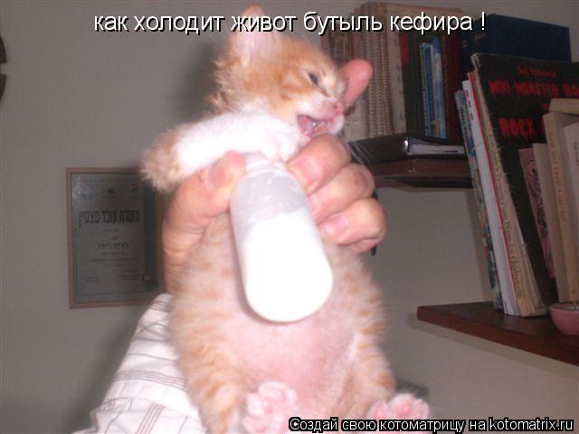 Котоматрица: как холодит живот бутыль кефира !