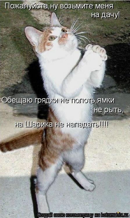 Котоматрица: Пожалуйста,ну возьмите меня на дачу! Обещаю грядки не полоть,ямки не рыть, на Шарика не нападать!!!!