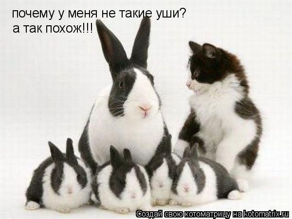 Котоматрица: почему у меня не такие уши?   а так похож!!!