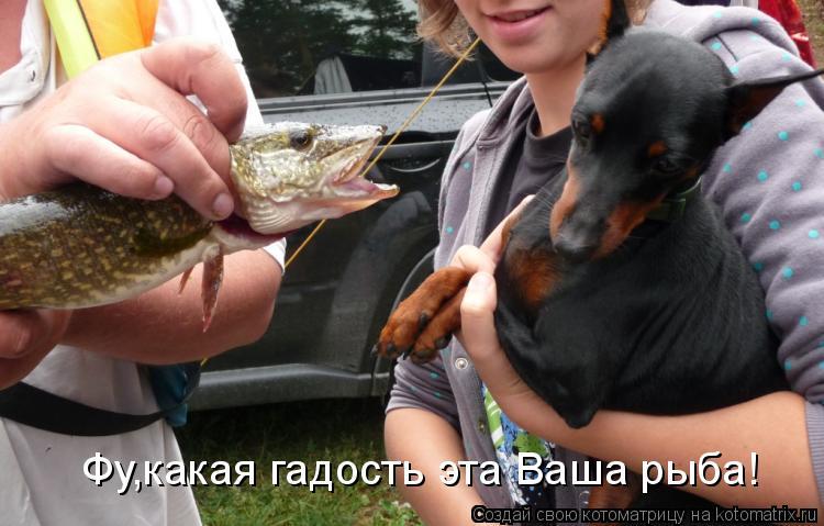 Котоматрица: Фу,какая гадость эта Ваша рыба!