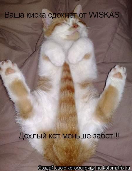 Котоматрица: Ваша киска сдохнет от WISKAS Дохлый кот меньше забот!!!